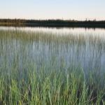végétation au bord du lac Larouche