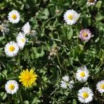 divers fleurs naturelles