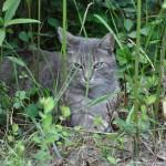 chat libre, gardien du jardin