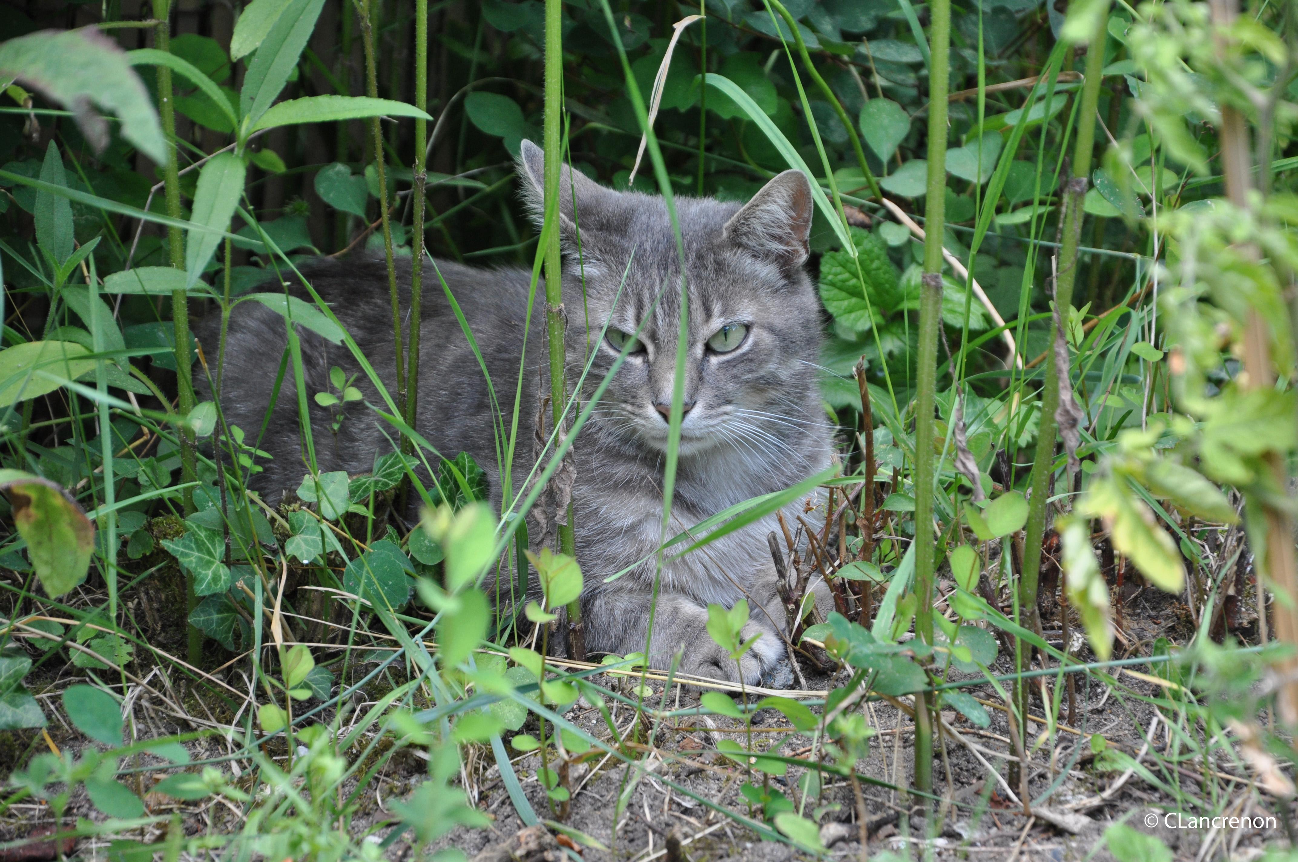 25 chat libre gardien du jardin montagnes for Jardin 2 montagnes