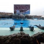 Les dauphins font un show