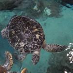 Tortue (me rappelle les Galápagos)