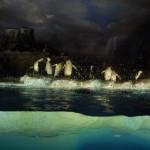 Colonie de Pingouins extraordinaire
