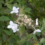 Jolies fleurs de montagne