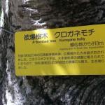 Plaque sur l'arbre qui a survécu