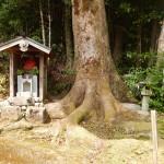 Toujours des arbres extraordinaires