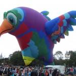 Un oiseau ballon ... magnifique