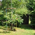 Cosmologie dans son environnement naturel côté jardin