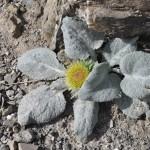 Fleur au sommet