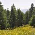 Redescende dans la forêt