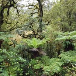 Marche en forêt