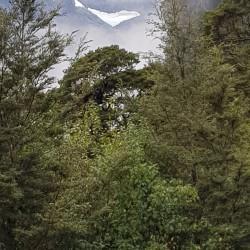 Glacier en allant vers Milford Sound