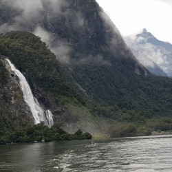Cruise in Milford Sound