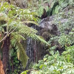 Petite cascade en montant, dans une végétation luxuriante
