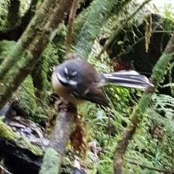 Oiseau qui me suit ... Dieu nature, mon père ...