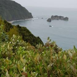 La côte, marine réservé tout proche de Milford Sound Piopatahi