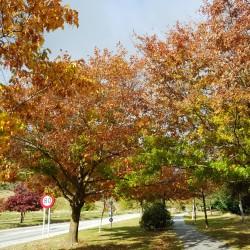 C'est bien l'automne
