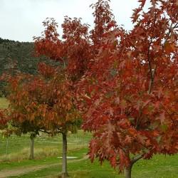 Et oui le froid, la neige sur les sommets, les feuilles rougissent ...