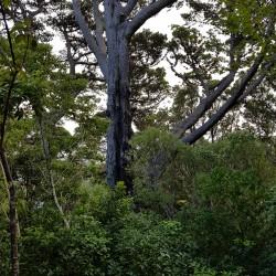Des arbres incroyables