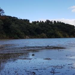 Baie Titirangi