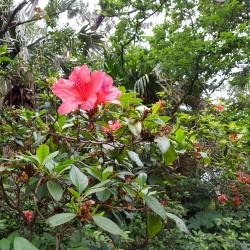 Fleur île Tokashiki