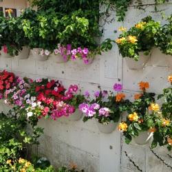 Fleurs maison Okinawa