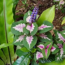 Fleurs Okinawa