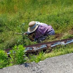 Vieille femme travaillant