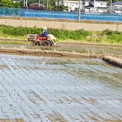 Travail dans une rizière