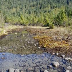 Environnement de l'original, saumon, Aigle, ours...