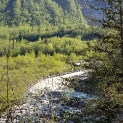 Vallée jeunes feuilles en montant à White pass