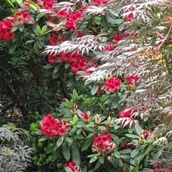 DARTS HILL Garden Surrey